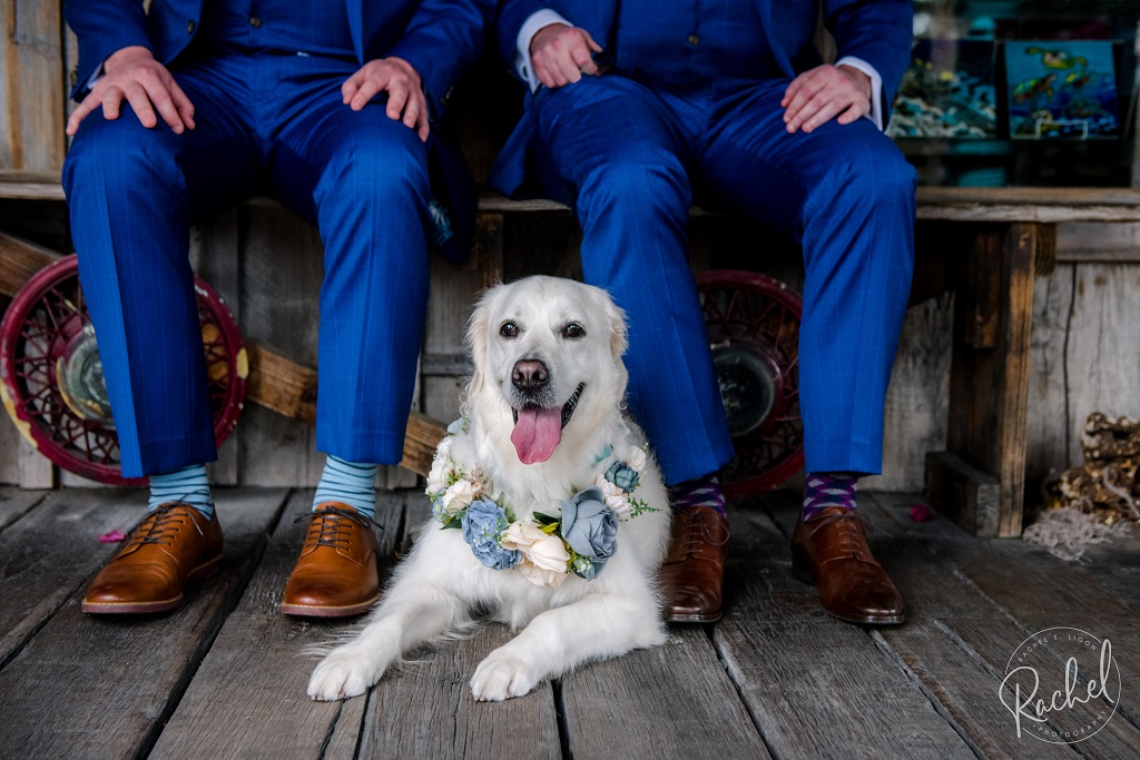 Key West Dog Friendly Wedding
